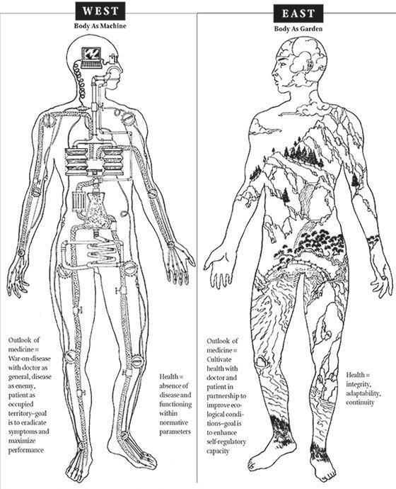body is a garden.jpg